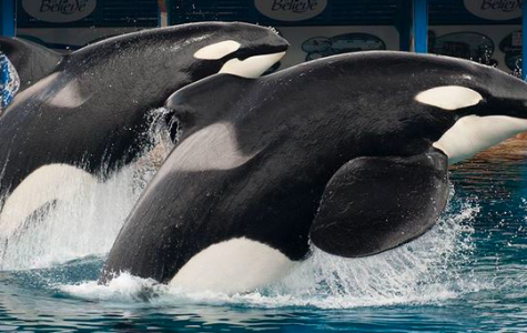 Scandalous SeaWorld: tragedy behind the tanks