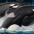 Scandalous SeaWorld: tragedy behind the tanks