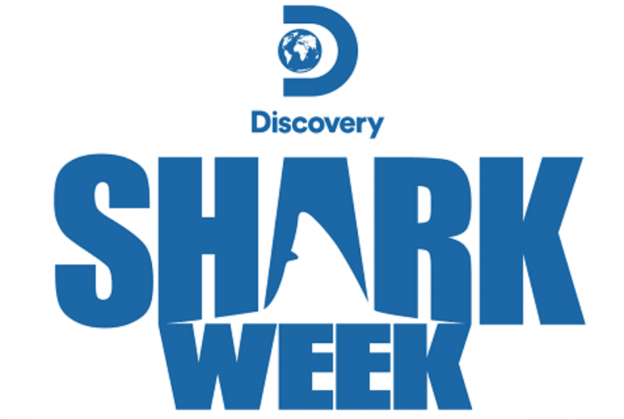AIC+student+featured+on+Discovery+Channel%27s+Shark+Week