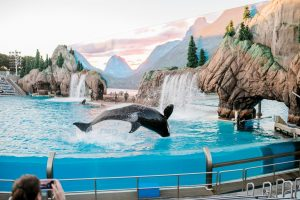 Blackfish Delivers Captivating Message About Animal Captivity, Just In Time For Quarantine