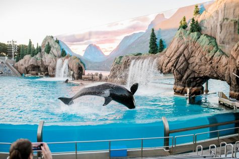 """Blackfish"" Delivers Captivating Message About Animal Captivity, Just In Time For Quarantine"